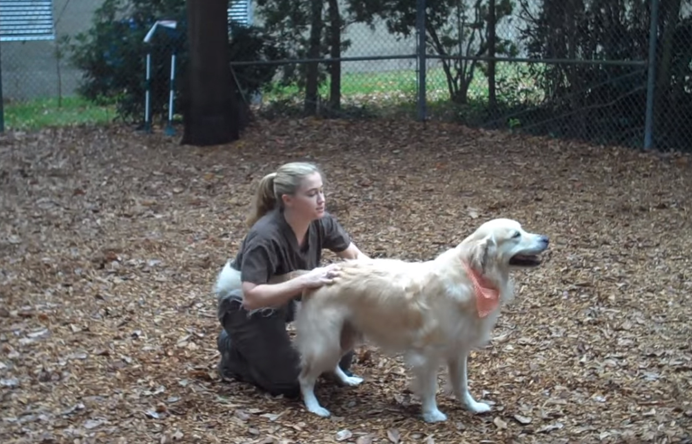 play yard with dog at pet keepers boarding kennel