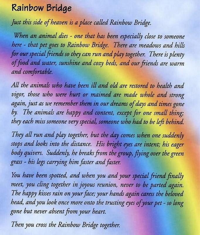 pet end of life rainbow bridge